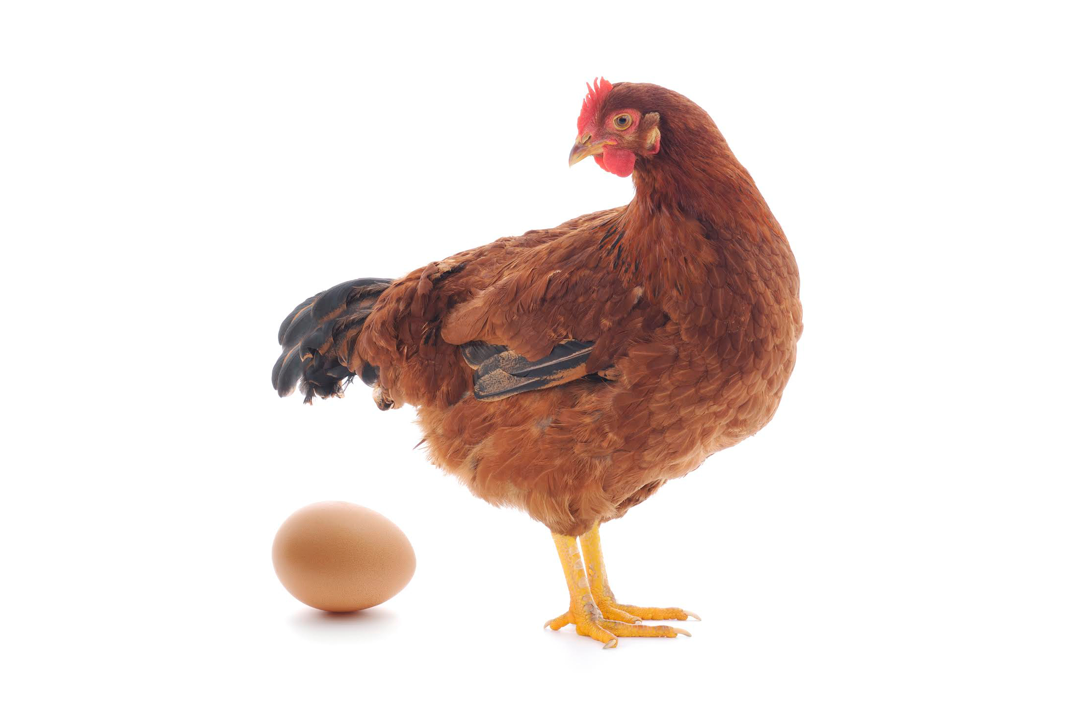 Qualitative vs. Quantitative - Which Comes First, the Chicken or the Egg?